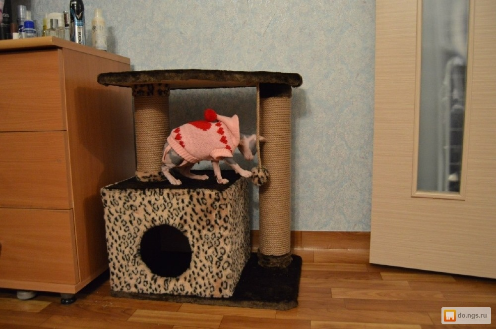 Как сделать детям домик для кошек