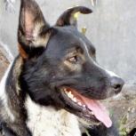 Пёс в заботливую семью, Красноярск