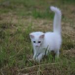 Куплю котёнка, Красноярск