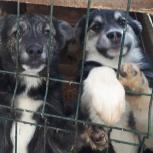 Чита и Балу ищут хозяев и дома для охраны, Красноярск