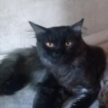Красивый кот с оригинальным окрасом - черный дым, Красноярск