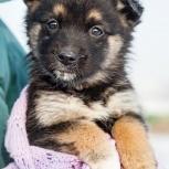 Торри ищет дом, щенок, Красноярск