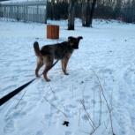 Собачка в частный дом, Красноярск