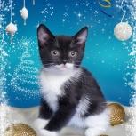 Котята под рождественскую ёлку, Красноярск