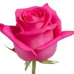 Розовые розы Топаз Topaz, Красноярск