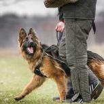 Дрессировка Собак.Опытный Кинолог, Красноярск