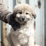 Миха ищет хозяина и дом для охраны, Красноярск