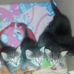 Очень симпатичным котятам нужны добрые хозяева, Красноярск