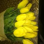 Тюльпаны extra оптом Красноярск, Абакан, Новосибирск Ачинск (malaysia), Красноярск