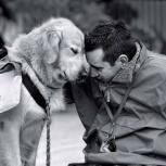 Дрессировка собак. Кинолог в Красноярске, Красноярск
