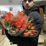 Тюльпаны оптом Новосибирск (45-70см) и мимоза к 8 марта 2021г., Красноярск