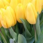 Желтые тюльпаны от производителя сорт Стронг Голд, Красноярск