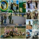 Дрессировка собак в красноярске, Красноярск