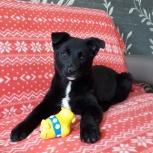 Собака Мила ищет дом и любимого хозяина, Красноярск