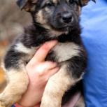 Малышка собачка ищет дом и хозяина, Красноярск