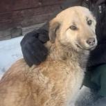 Собака в добрые руки, Красноярск