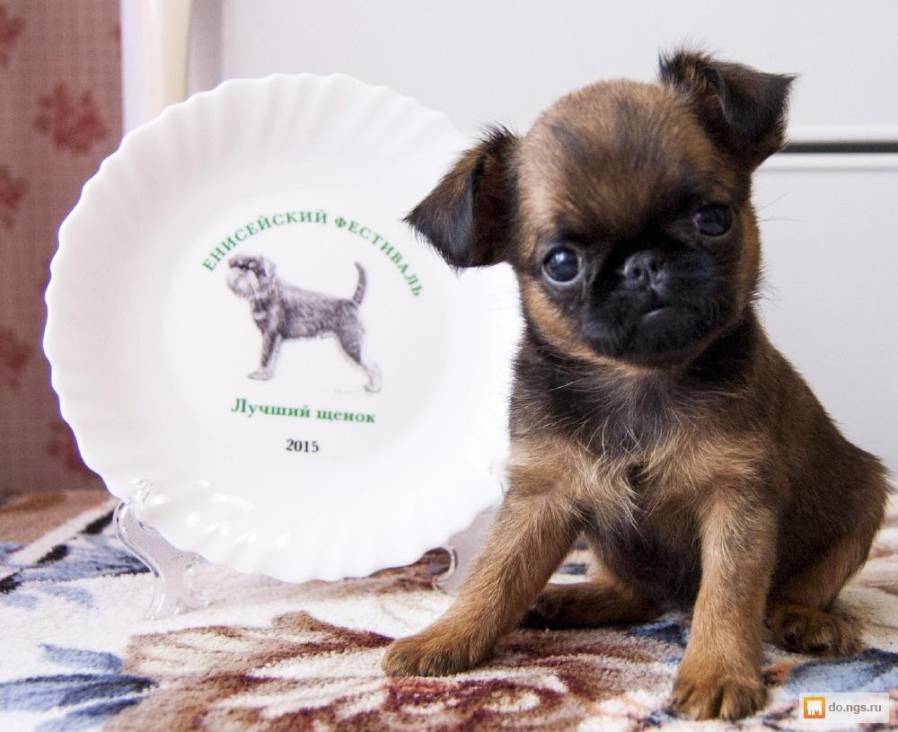 Частные объявления продажи собак красноярска строительные и ремонтные работы частные объявления