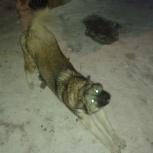 Собака Вега ищет дом, Красноярск
