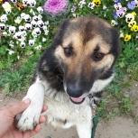 Собака шера ищет дом, Красноярск
