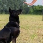 Дрессировка собак (кинолог) в Красноярске, Красноярск