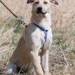 Собака Фиджи ищет дом, Красноярск