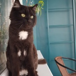 Клевый кот ищет дом, Красноярск
