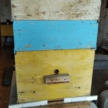 Улья для пчел, Красноярск
