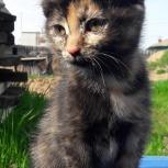 Отдам котят девочек в добрые руки, Красноярск