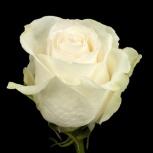 Белые розы оптом к 8 марта, Красноярск