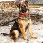 Торри - будущая охранница и компаньон, Красноярск