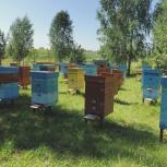 Продам пчел вместе с улями, Красноярск