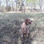 отдам беспородных красивых щенков, Красноярск