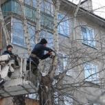 Спил деревьев, обрезка веток, кронирование, Красноярск