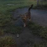 Отдам кошку в хорошие руки, Красноярск