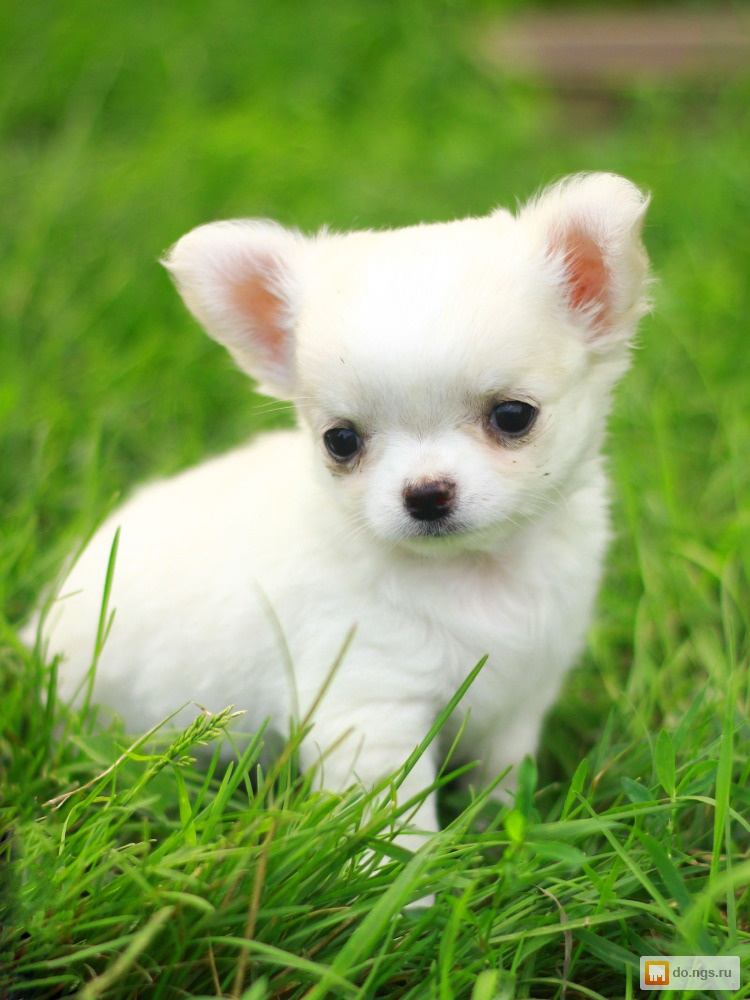 Картинка породы маленьких собак