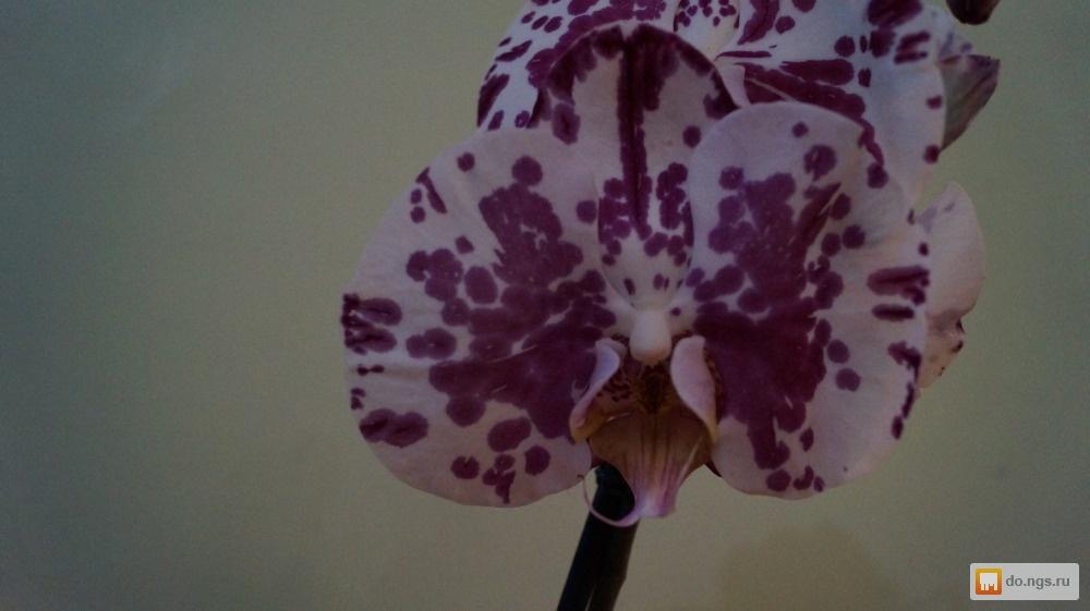Купить цветы орхидею в красноярске, корпоративным клиентам магазин