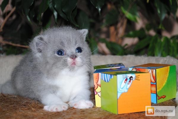 Фото редких котят