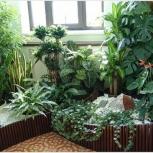 Уход за комнатными растениями, Красноярск