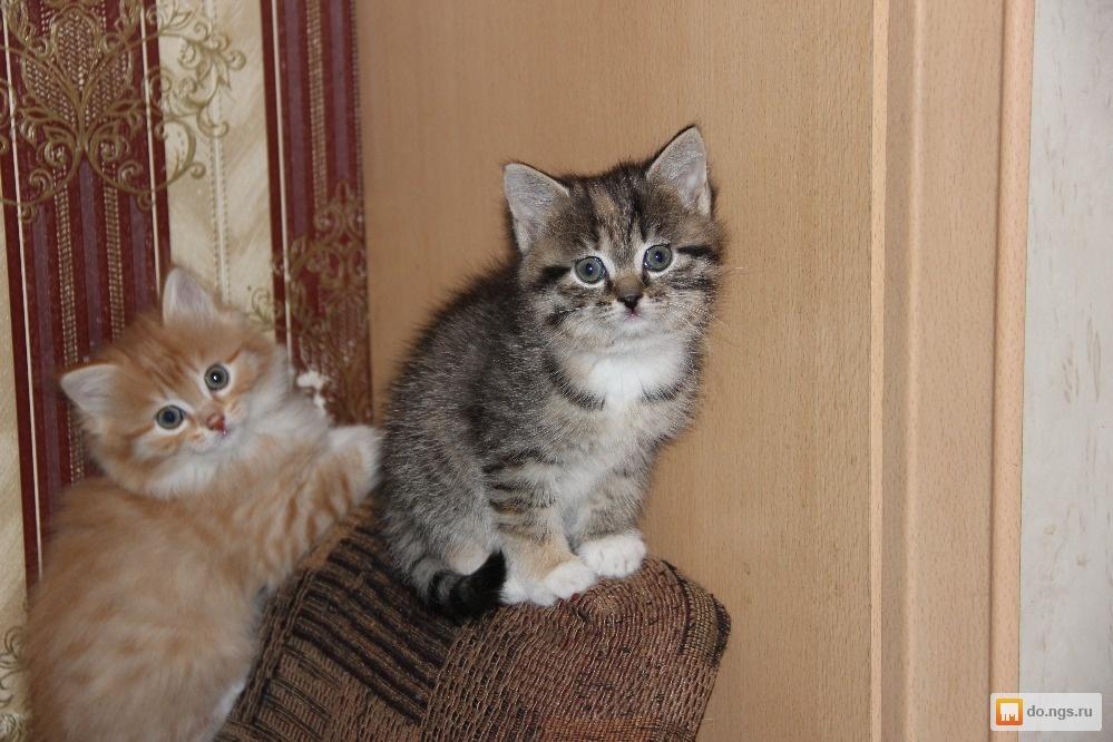 Отдам котенка в красноярске